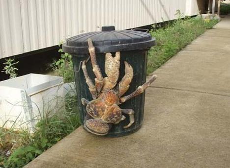 giant-coconut-crab