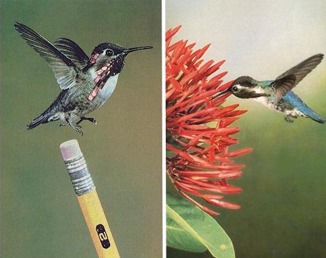 bee-hummingbird