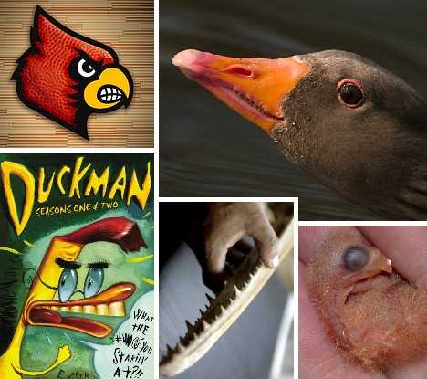 Brush Your Beak: 10 Amazing Birds With Teeth