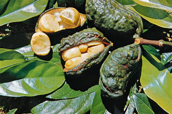 Crunch Time: The World's 9 Most Unusual Nuts