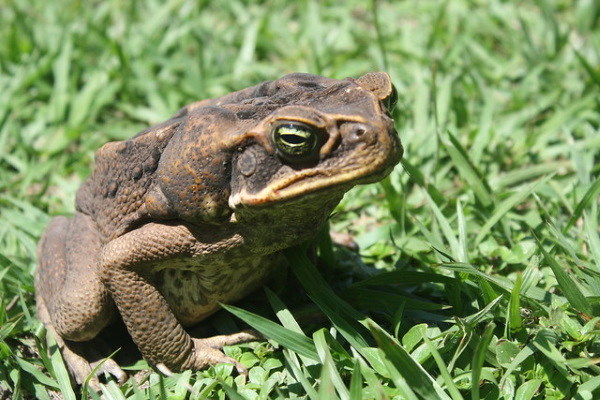 Warts & All: The World's 7 Most Amazing Toads