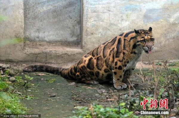 Critter-cal Mass: 7 Amazingly Obese Zoo Animals
