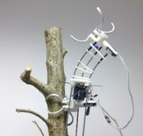 biomimicry inchworm robot 2