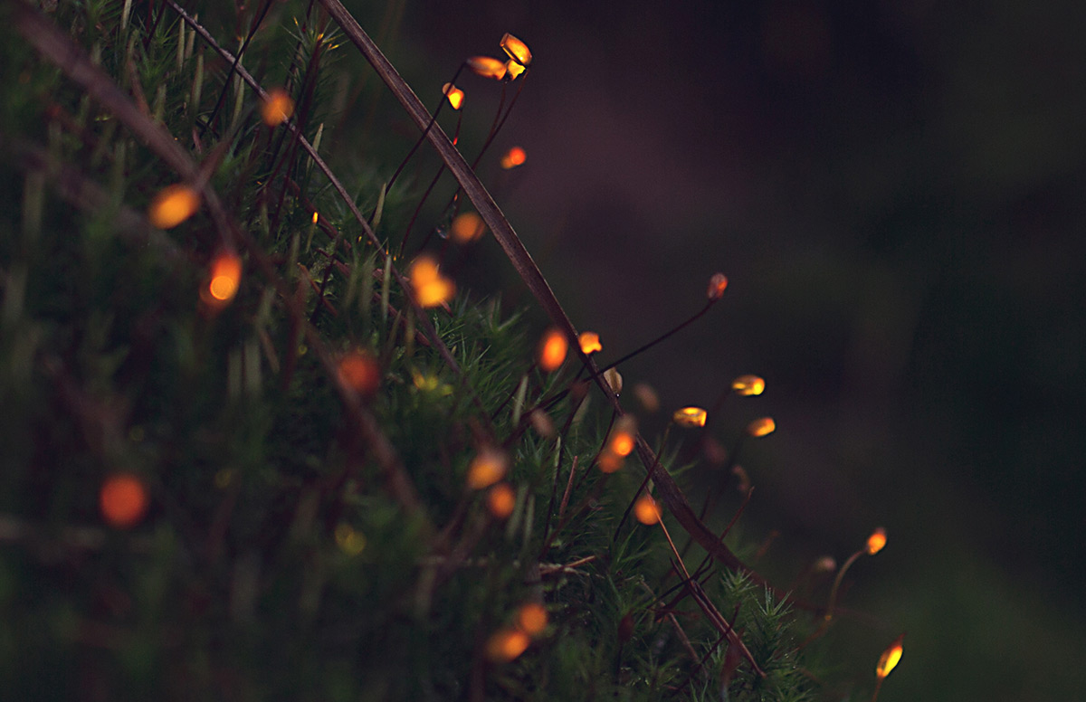 bio forest 1
