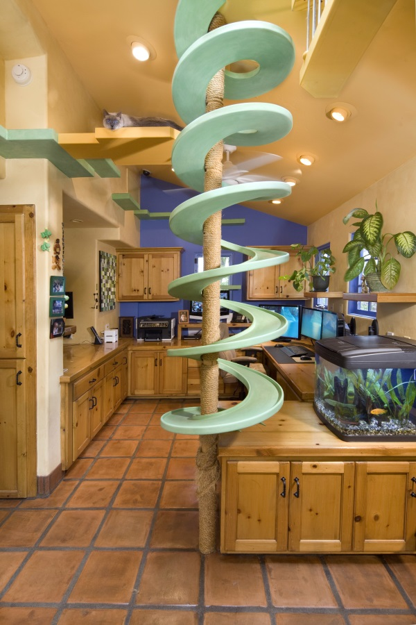 California Cat Lover's House 62x