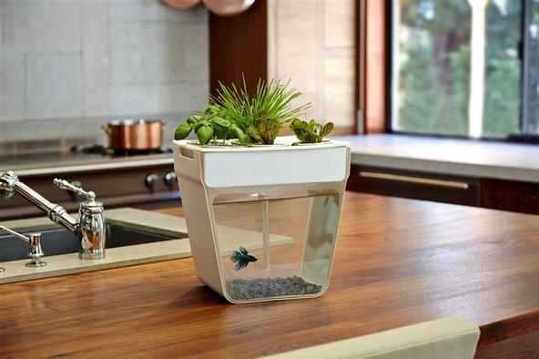 modern planters aquafarm