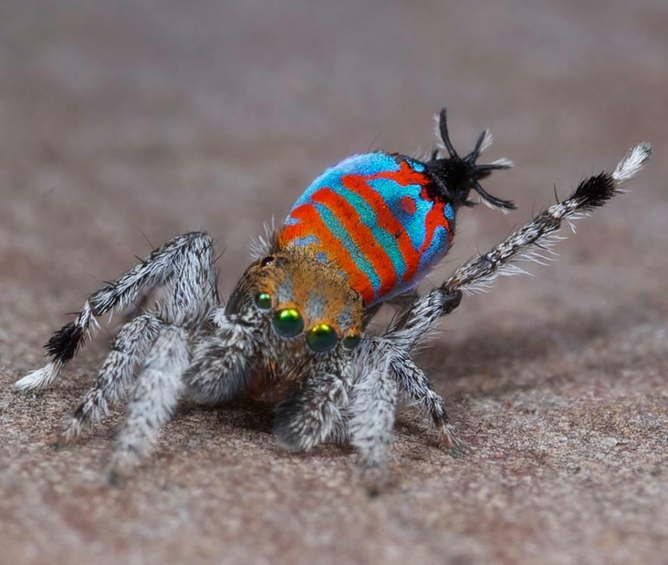 new spiders 1
