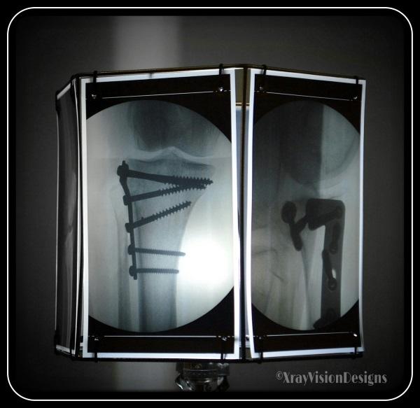 Animal X-Ray Lampshades 4
