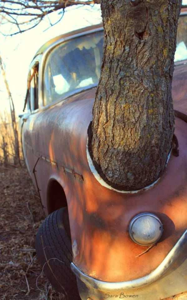 abandoned car tree 1