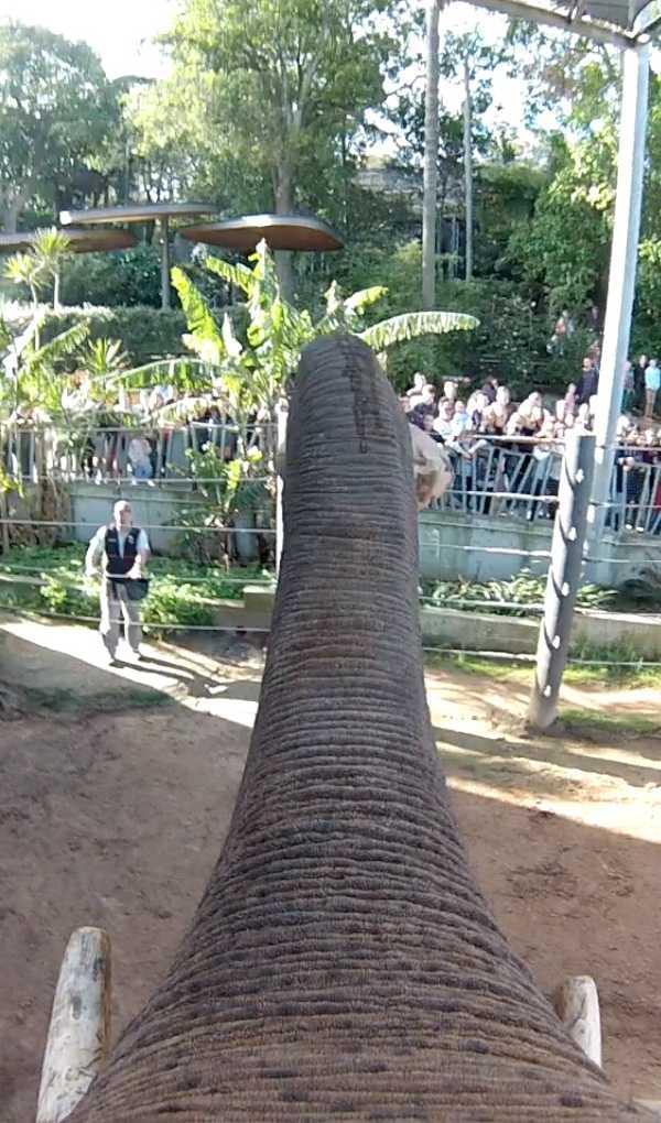 elephant-gopro-4