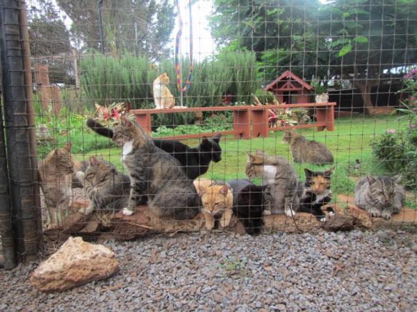 Lanai-Cat-Sanctuary-8