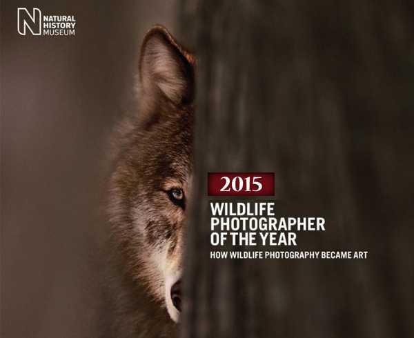 wildlife-0