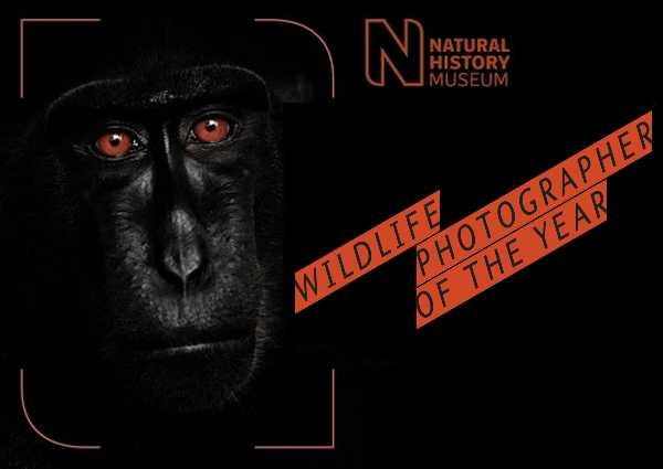 2015-wildlife-winners-0