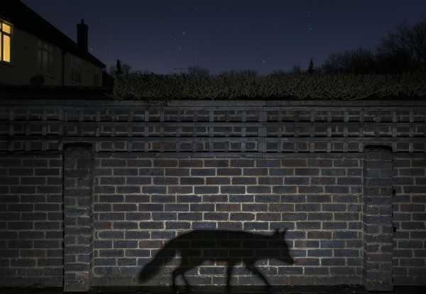 2015-wildlife-winners-1