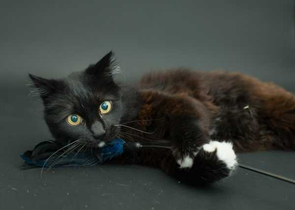 black-cat-project-3b