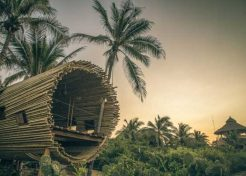 Treehouse Rules: Playa Viva's Sustainable Suite