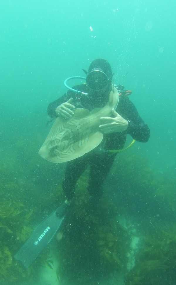 shark-diver-friendship-1