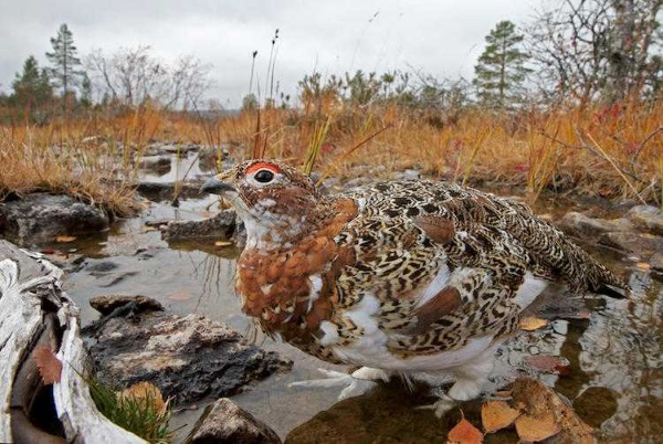 2017-wildlife-birds-1