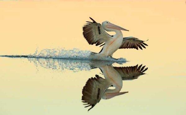 2017-wildlife-birds-5