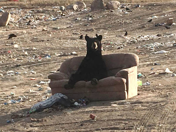 sofa-bear-4