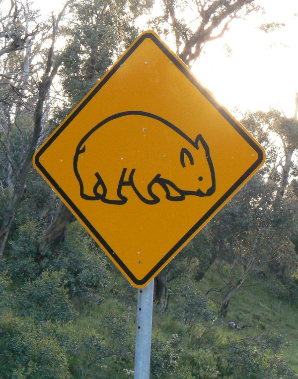 Koalified: 7 Amazing Australian Animal Crossing Signs