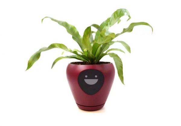 Face Plant: Lüa Smart Planter Is Your Botanical Buddy