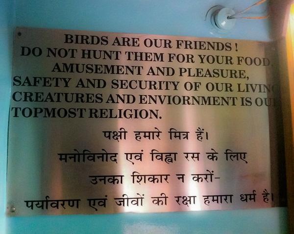 Art Of The Heal: Macabre Murals Of The Jain Bird Hospital