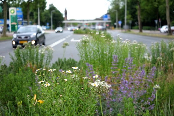 Buzz On: Urban Flower Strips Boost Bees & Bugs
